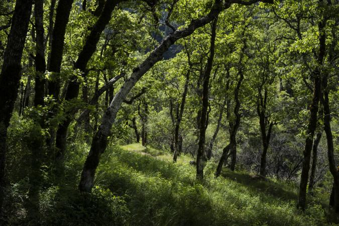 กองทุนเพื่อป้องกันไฟป่าและซ่อมบำรุงเส้นทางบนเขา
