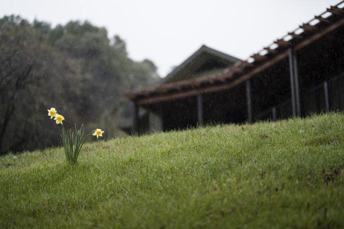 Spring Update from Abhayagiri