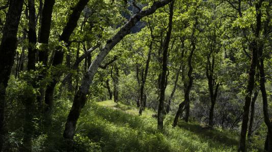 Sravasti Nuns Help Plant at OGM